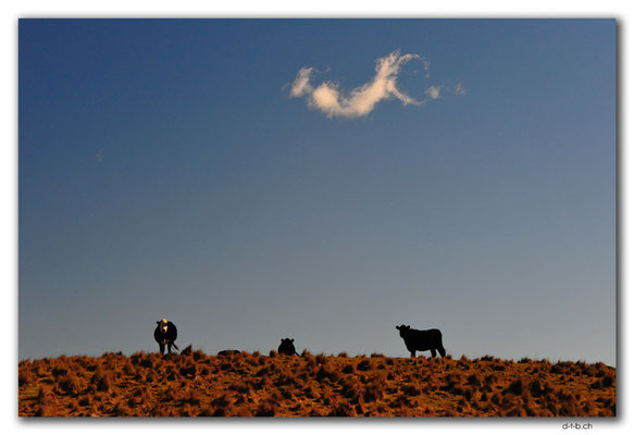 AU1495.Monaro Hwy.Drei Kühe