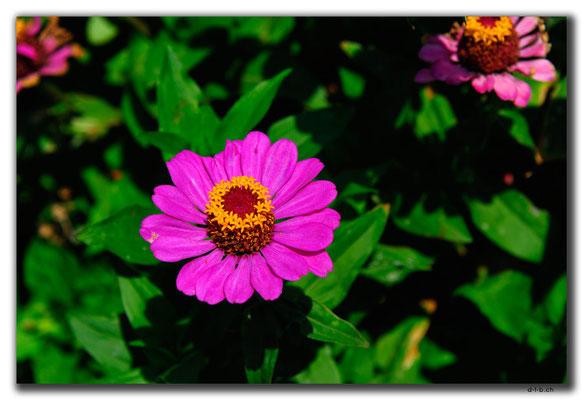 AZ062.Yanar Dag.Blume