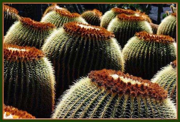 LAN027 Jardin de Cactus