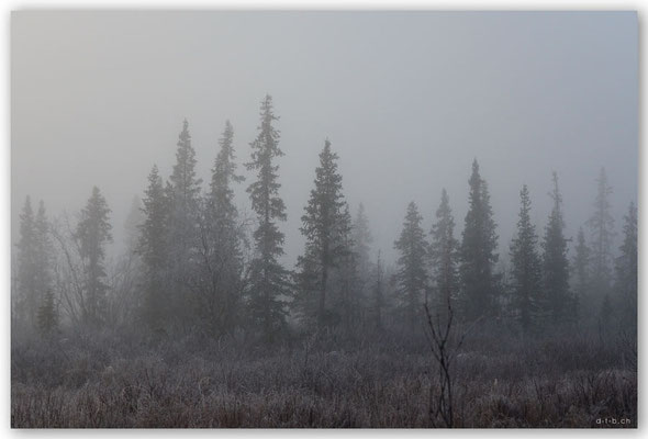 SE0048 Lappland im Nebel