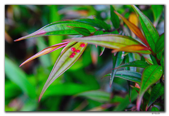 VN0186.Bach Ma N.P.Kranke Pflanze