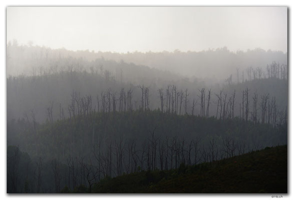 AU1443.Arthur Pieman Conservation Area.Forest in the mist