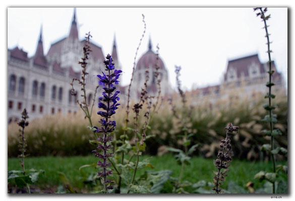 HU030.Budapest.Lavendel