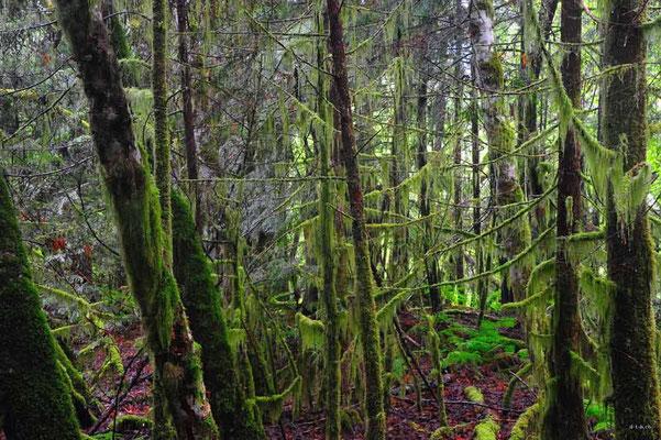 CA0137 Squamish Regenwald