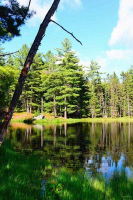CA0478 Algonquin Park Amikeus Lake