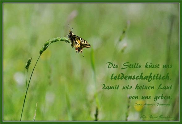 S0126.Schmetterling.Fanas.CH