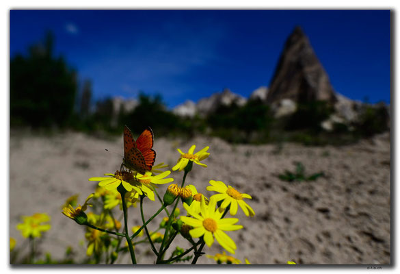 TR0754.Göreme.Schmetterling