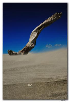 NZ0613.Farewell Spit.Ocean Beach.Drift wood