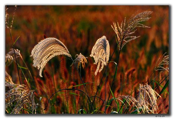 KR0142.Daegu.Pflanzen im Gegenlicht
