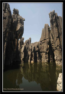 C0857Stone Forest