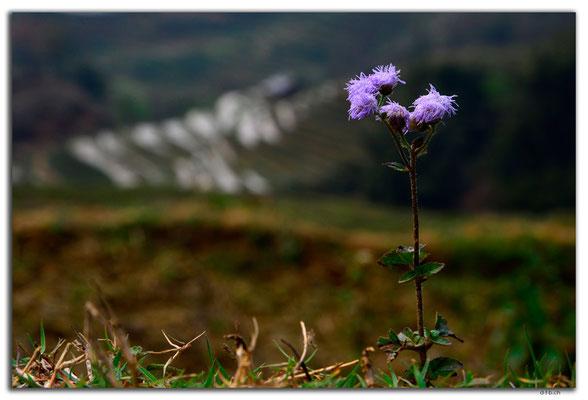 VN0055.Sapa.Muong Hoa Valley