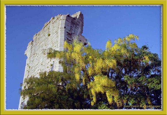 A0175.St.Hans&Gullregn.Visby.Gotland.SE