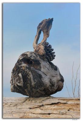 NZ0484.Motueka Sandspit.Driftwood Sculpture