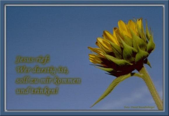 S0041 Sonnenblume,Klosters.CH.Johannes 7.37