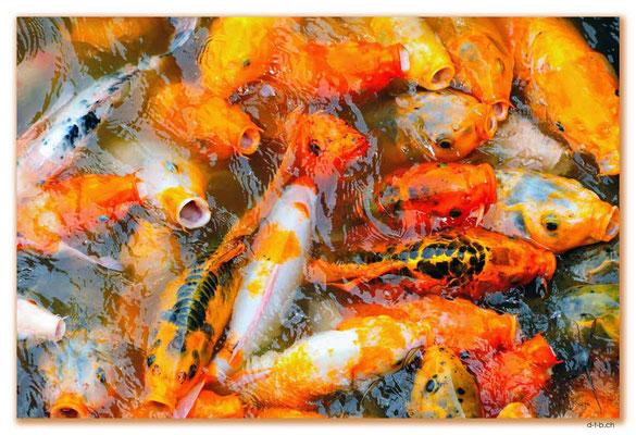VN0154.Hue.Fische