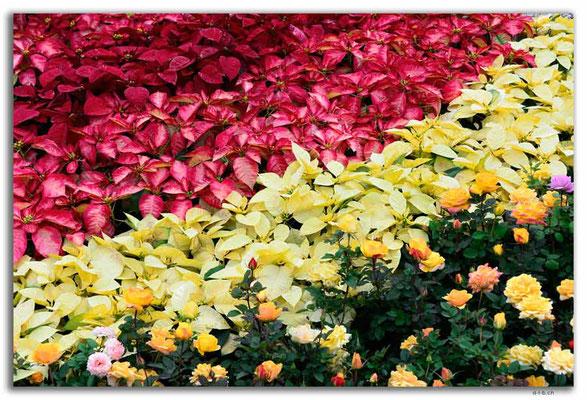 MO0038.Taipa.Blume im Garten
