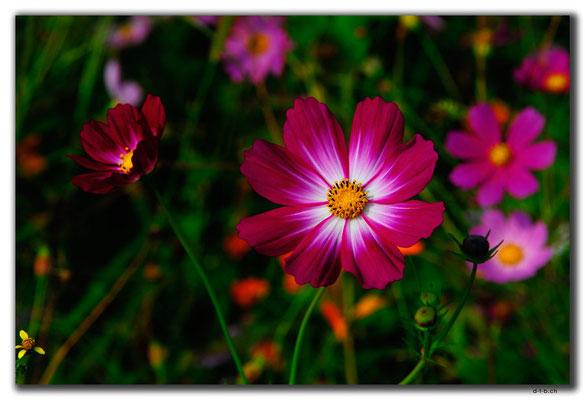 KR0146.Blumenwiese