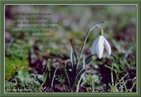 S0002,Schneeglöcklein,Klosters,CH.Text von Gerhard Tersteegen