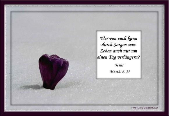 S0056.Krokus im Schnee.Klosters.CH.Matthäus 6.27