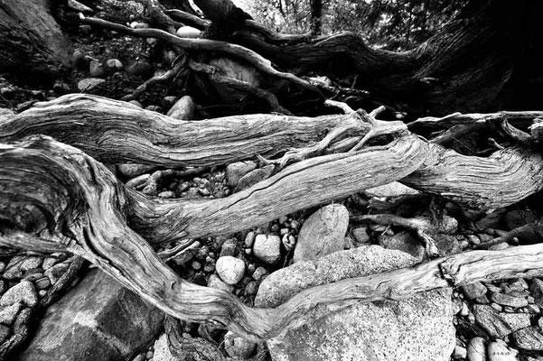 CA0260 Similkameen River Wurzelwerk