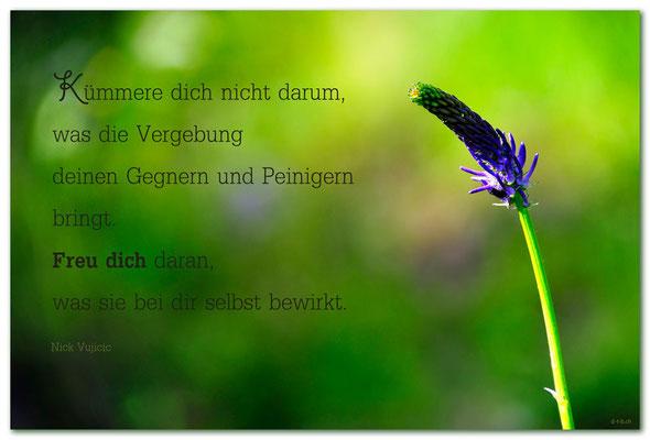 S0210Rapunzel.Schlappin.Klosters.CH.Text: Nick Vujicic