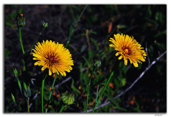 AU0480.Blumen