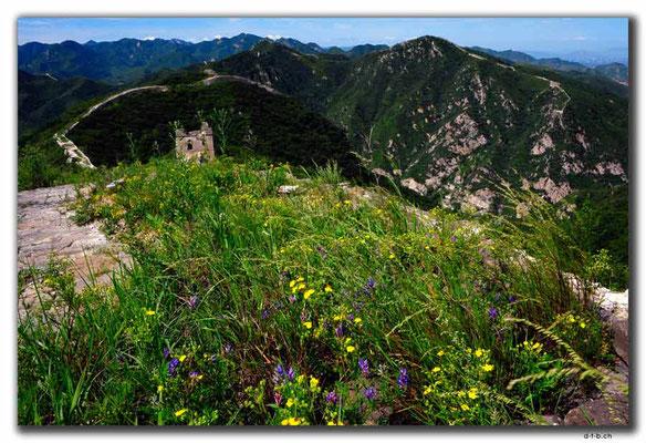 CN0355.Shixia.Blumen auf Grosser Mauer