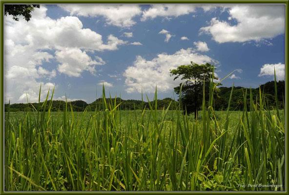 JM047.Landschaft
