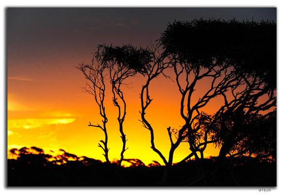 AU0944.Nullarbor N.P. Sunset