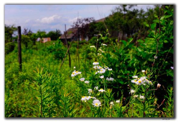 GE025.Blumen auf dem Land