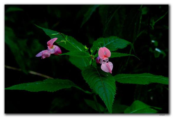 PL236.Morag.Orchidee