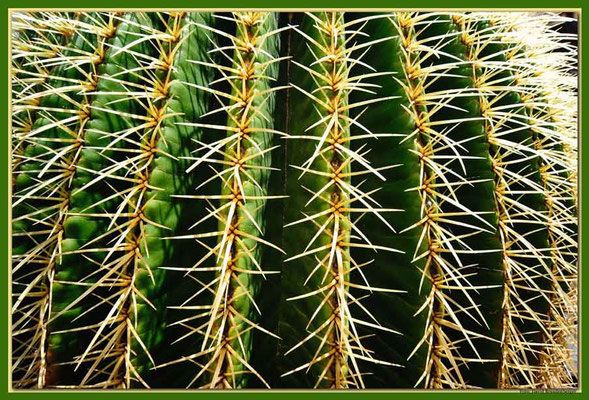 LAN030 Jardin de Cactus