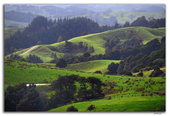 NZ0061.Aussicht vom Kaipara Coastal Hwy