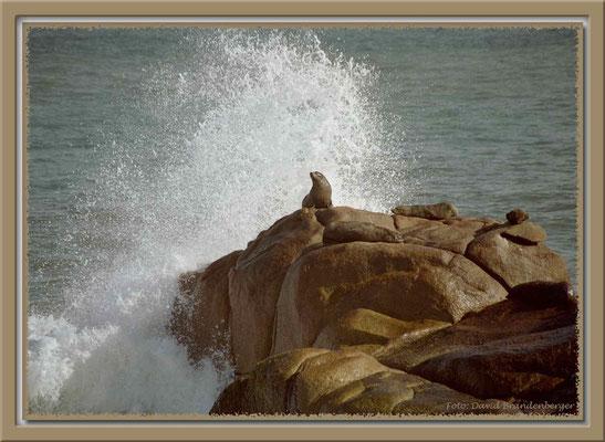 A0238.Lobo marinos.Cabo Polonio.UY