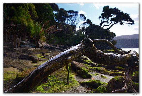 NZ0874.Stewart Island.Rakiura Track.North Arm
