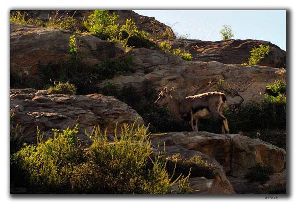 CN0244.Deer of Helan Mountain