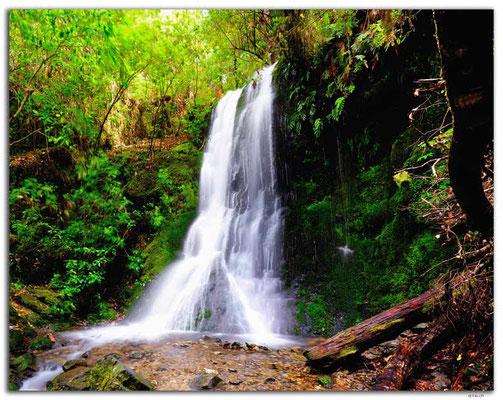 NZ0477.Pelorus Bridge.1.Waterfall