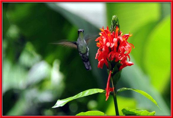 JM011 Blume und Kolibri