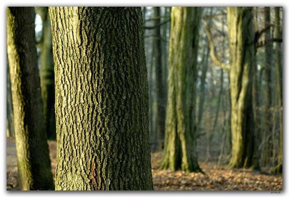 DE219.Hamburg.Bäume