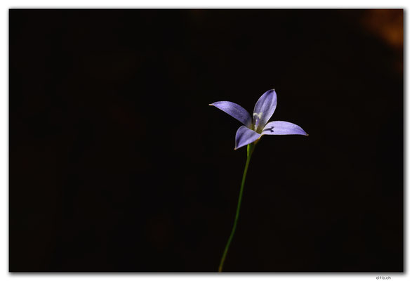 AU1066.Mt.Remarkable N.P.Blume