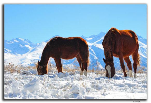 KG0034.Bishkek.Kyrgyz Ala Too und Pferde