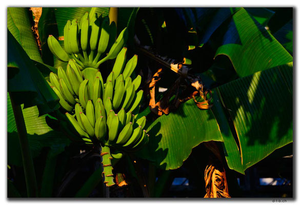 HK0102.Lamma Island.Bananen