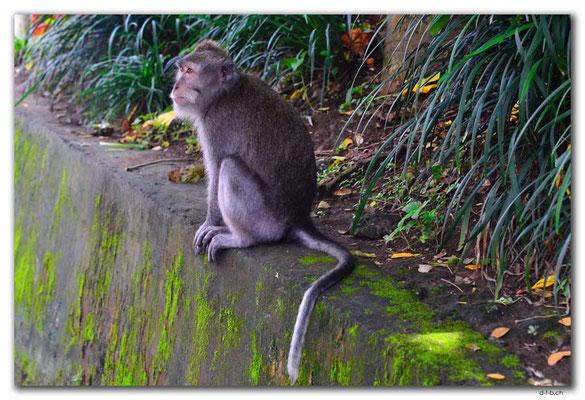 ID0143.Ubud.Monkey