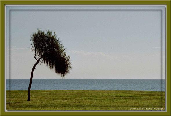 A0225.Montevideo,UY