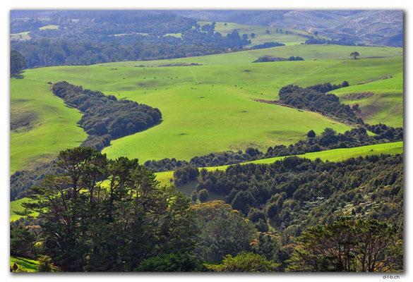 NZ0071.Landwirtschaft an der Kauriküste