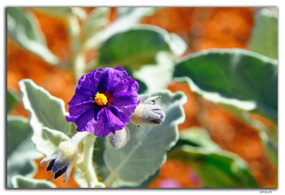 AU0357.Blume
