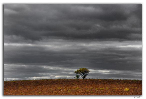 AU1116.Einzelner Baum
