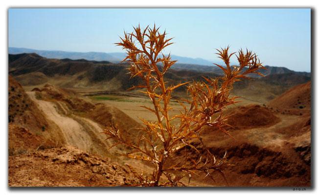 IR0353.Wüste