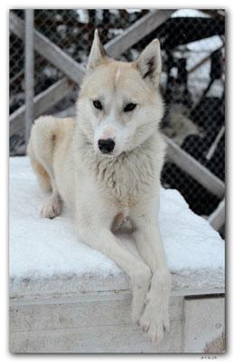 SE0118.Husky,Vips