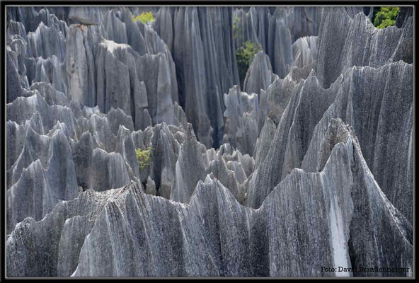 C0871Stone Forest